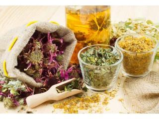 Все о лекарственных травах